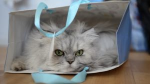 Kitty in Bag